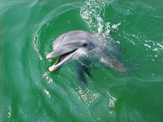 Our Panama City Beach Dolphin Tours will be one of the most memorable experiences you will have while visiting St. Andrews State Park and Shell Island. Florida Vacation, Florida Beaches, Shell Island, Dolphin Tours, Parasailing, St Andrews, Panama City Beach, Dolphins, State Parks