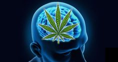 Cannabis May Help Rejuvenate the Aging Brain and Ward Off Dementia Medical Benefits Of Cannabis, Medical Marijuana, Alzheimer's Prevention, Depression Facts, Reverse Aging, Essential Oils For Skin, Thing 1, Health Heal, Alzheimer's And Dementia