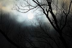 """Check out my art piece """"Mystical Morn"""" on crated.com #art #photography #mystical #sun #trees"""