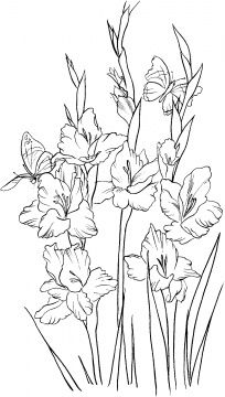 Gladiolus 2 coloring page - Free Printable Coloring Pages Printable Flower Coloring Pages, Animal Coloring Pages, Adult Coloring Pages, Coloring Sheets, Free Coloring Pages, Coloring Books, Gladioli, Gladiolus Flower, Spring Coloring Pages