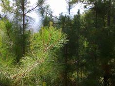Bosque en Filincas, El Guayabo, Camotán.