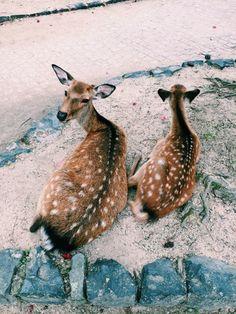 Deer | VSCO | calliope