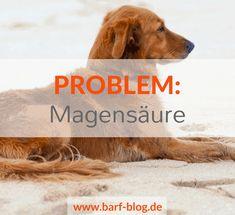Übersäuerung Gastritis Licky Fits bei Hunden