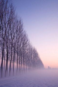 A typical foggy by Clickalps .com