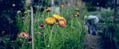 Anthropologie: Women Farmers - Tara Kolla. We had the pleasure of visiting Tara Kolla's garden while in Los Angeles for our June catalog sho...