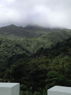 Rain forest, San Juan Puerto Rico