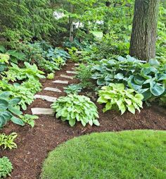 Look at your yard at different times of the day, from different angles and in different weather conditions. Learn where the sunlight falls, where the shade pockets are, where the rain pools before choosing plants for those areas