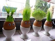 """If you love juicing wheat grass, why not try growing it in these creative """"planters"""" made from egg shells. Kids Crafts, Easter Crafts, Holiday Crafts, Thanksgiving Crafts, Easter Decor, Easter Gift, Egg Shell Planters, Diy Planters, Diy Niños Manualidades"""