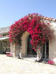 Red across the entry with bougainvilleas arch coverage.