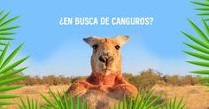 ¡Participa y gana la beca #AtrapaUnaBeca para estudiar en #Australia con @AUssieYouTOO!