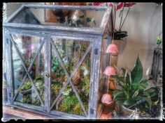My magical rustic woodland glass house fairy gardens..Terrarium
