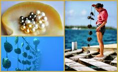 Small Business Ideas | List Of Small Business Ideas: How to Start a Pearl Farming Business