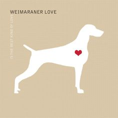 Weimaraner Love is the Best Kind of Love!