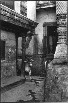 Henri Cartier-Bresson in Ahmedabad, Gujarat, India 1966 Robert Doisneau, Amazing Photography, Street Photography, Art Photography, Magnum Photos, Black White Photos, Black And White Photography, Vintage Photographs, Vintage Photos