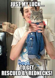 That cat is adorable! And look at how pleased his/her human is!