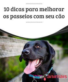Passeios com seu cão devem ser agradáveis. Veja aqui 10 dicas Seguindo todas essas dicas você verá que os passeios com seu cão serão muito mais tranquilos e seu pet irá agradecer imensamente a você.