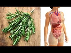 What is Rosemary Good For? Rosemary Health Benefits - YouTube