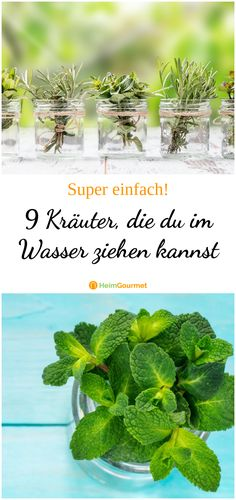 9 herbs you can pull in the water- 9 Kräuter, die du im Wasser ziehen kannst 9 herbs you can pull in the water - Water Garden, Herb Garden, Vegetable Garden, Recycling Containers, Balcony Flowers, Kitchen Herbs, Plants Are Friends, Recycled Garden, Herbs Indoors