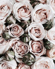 Discovered by lex. Find images and videos about beauty, nature and flowers on We Heart It - the app to get lost in what you love.