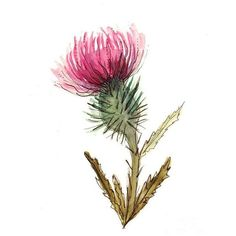 Scottish Thistle Paintings ❤ liked on Polyvore featuring home and home decor