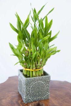 1//12 Miniaturas Metal Decorativa Planta Vaso Para Casa De Boneca Jardim Pátio Preto P
