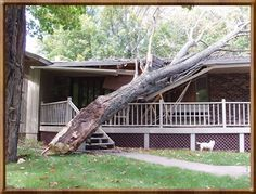 Handling Roof Damage from Hazardous Storms Roofing Services, Roofing Contractors, Roof Restoration, Tree Felling, Residential Roofing, Roofing Materials, Storms, House, Thunderstorms