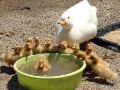 llbwwb:  Swimming lesson by Ann Tish