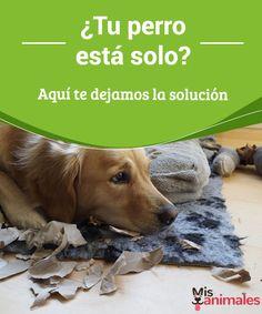 ¿Tu perro está solo? Aquí te dejamos la solución   Una de las situaciones más delicadas para el canino es cuando tu perro está solo en casa, lo que puede provocar diferentes problemas de salud  #Consejos #salud #problemas