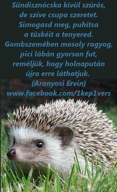 aranyosi ervin versek - Google keresés Poems, Animals, Google, Kids, Young Children, Animales, Boys, Animaux, Poetry