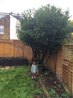 The Laurel with Audrey (95cm) for scale. There is a gate for rear access behind the tree.