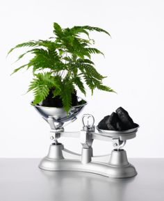 Weighing scales with Fern (Pteris Fauriei) and Coal (Carbon)