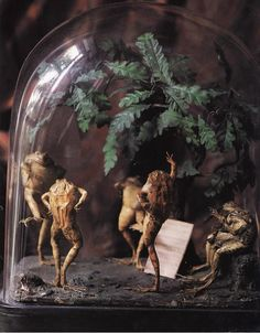 Oh it's just some taxidermy frogs in their terrarium