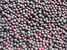 You may not be familiar with the Saskatoon berry. Perhaps, it is because you know it better as the juneberry or serviceberry. If you& tasted Saskatoon be Gf Recipes, Real Food Recipes, Cooking Recipes, Saskatoon Berry Recipe, How To Cook Everything, Leaf Tv, Food C, Home Canning, How Sweet Eats
