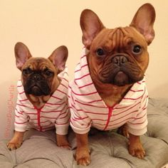 Batpig & Me Tumble It • Just trying on our jammies for our upcoming...