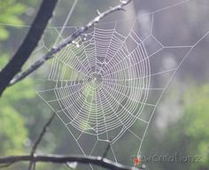 Spider web nature print 8x10 by NewCreatioNZ on Etsy, $20.00