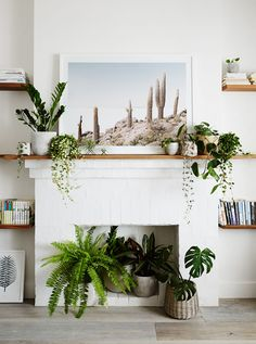 Live plants to decorate unused fireplace Unused Fireplace, Faux Fireplace, Fireplace In Dining Room, Fireplaces, Empty Fireplace Ideas, Office With Fireplace, White Fireplace, Bedroom Fireplace, Living Room Designs