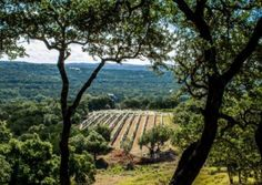 Hawk's Shadow Winery | Texas wine events and Texas Wineries