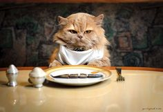 forse un micio è migliore di noi umani a tavola
