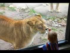 Kids At The Zoo: san diego & other popular zoo animals Compilation Adorable Cute Animals, Pet Videos, Cute Animal Videos, Gif Pictures, Zoo Animals, Cute Babies, San Diego, Popular, Pets