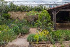 A Perfumer's Garden in Grasse at the Chelsea Flower Show / RHS Gardening