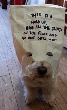 Funny Animal Pictures Of The Day – Westie Funny Animal Pictures, Dog Pictures, Best Funny Pictures, Funny Photos, Animals And Pets, Funny Animals, Cute Animals, I Love Dogs, Puppy Love