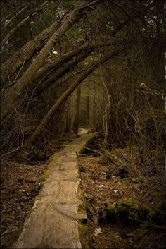 Druids Trees: Through the dark #woods...