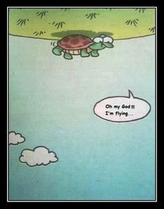 """#13 A whole new world can be opened to us if we broaden our points of view. Maybe we can even """"fly"""" like this turtle."""