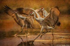 2019 Grand Imaging Awards finalists: Landscape & Nature | Professional Photographer Magazine