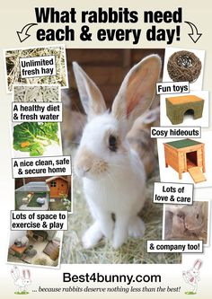Pin By Carena Liebenberg On Mini Farm Bunny Cages, Bunny Care, Bunny Baby Care how to care for baby bunnies Bunny Cages, Rabbit Cages, House Rabbit, Rabbit Toys, Pet Rabbit, Rabbit Diet, Rabbit Litter, Rabbit Treats, Funny Rabbit
