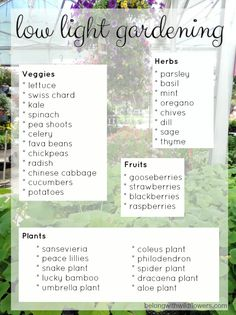 Low Light and Small Space Garden Alternatives :: Hometalk