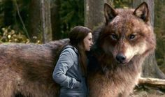 the wolves from twilight | In Wolf Form, Jacob in wolf form