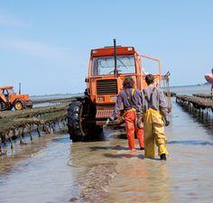 La marée - Huître oyster ARIN à Paimpol en Bretagne vente d'huîtres ostréiculteur ferme marine paimpolaise