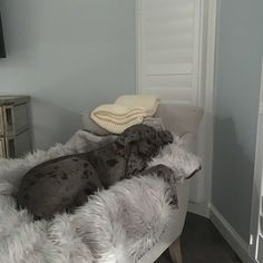 Keep your home clean with ultra soft covers, from the couch to your bed, with the Black Faux Cowhide PupProtector™ - A waterproof luxury pet throw made from high-quality, machine washable faux-fur. White Throw Blanket, Dog Throw, Dog Blanket, Animal Print Bedding, Faux Fur Bedding, Orthopedic Dog Bed, Bull Dog, Dog Feeding, Pure White