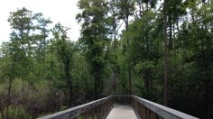 The Panama City Beach Conservation Park is a great place to go for a hike and to get away from the busy beach. It is very quiet and offers many different trails and boardwalks through wetlands and pine forest.